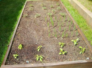 peppers, onions, tomatoes, green beans