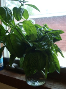 Another way to harvest basil and save it, without having to dry it.
