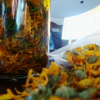 Healing Calendula and Lavender Oil